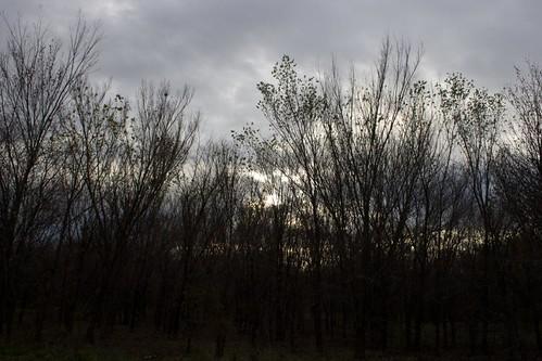 Trees Dark