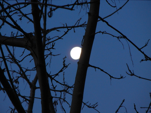 Early Morning Moon _ 9091