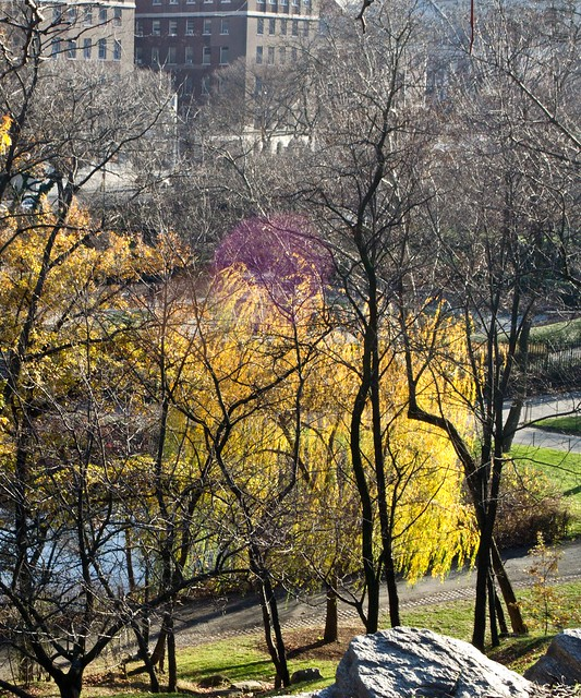 2011121159-cat harlem meer from the hill above i ncolor3DSC_0520.jpg