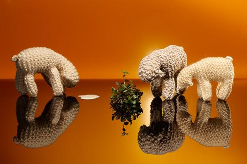 Sheep2011_0489a_1