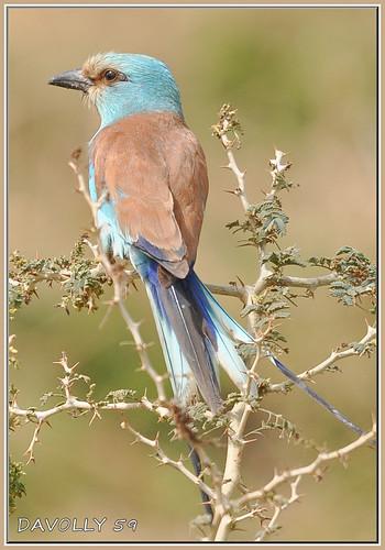 ngc npc westafrica gambia thegambia kotu birdsofthegambia
