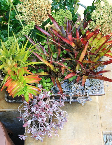 Succulents and bromeliad in pots