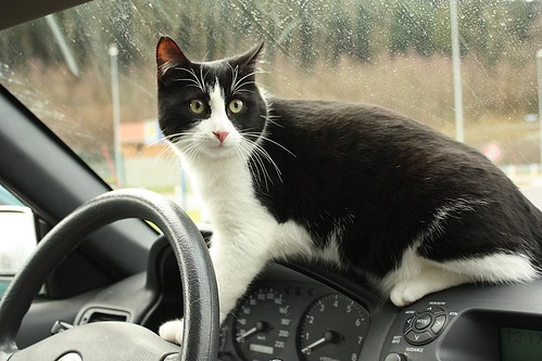 chat protege voiture © Justine Neubach/Flickr