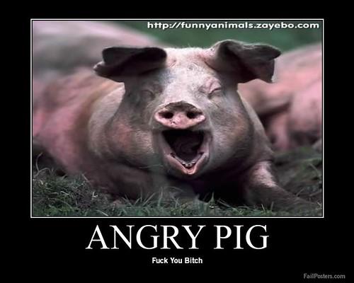 Ядосано прасе