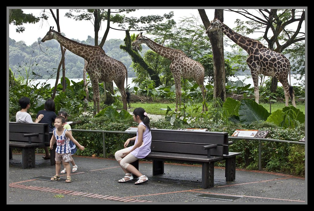 Singapore-guide-zoo