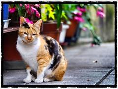 鞆の浦の路地猫