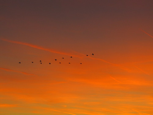 IMG_4309_Geese_in_Sunset
