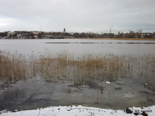 Talvi tulee Töölönlahteen by Anna Amnell