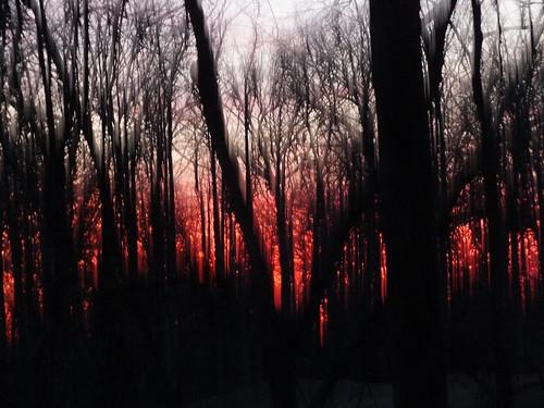 winter sunset virginia woods