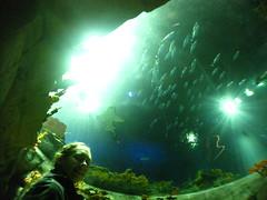 Ocean Park Grand Aquarium Skylight