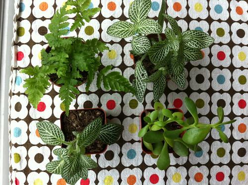 my plants for the bottle garden