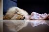 tika-sleep-reflection