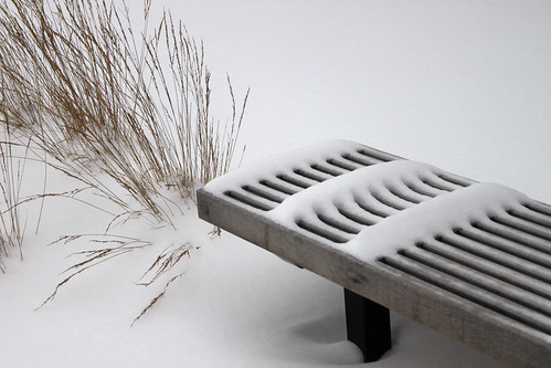Bench and Ornamental Grass