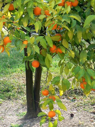 oranger 1.jpg
