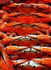spiny lobster(0.0), crab boil(0.0), seafood boil(0.0), dendrobranchiata(0.0), caridean shrimp(0.0), lobster(0.0), fish(0.0), dungeness crab(0.0), food(0.0), american lobster(0.0), crab(1.0), animal(1.0), crustacean(1.0), seafood(1.0), invertebrate(1.0), king crab(1.0),