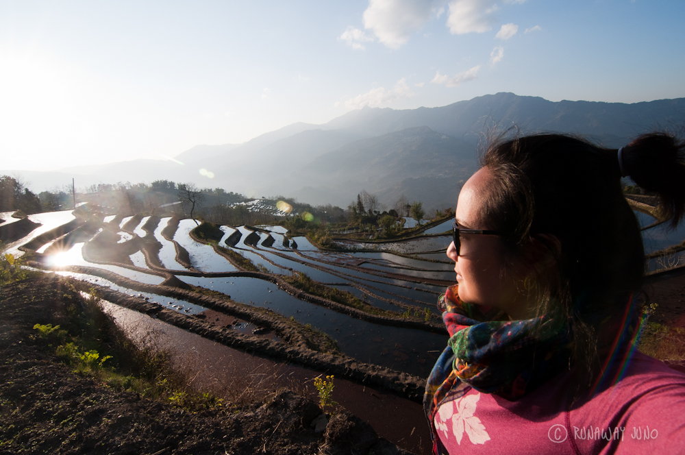 Juno in the rice terrace
