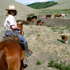 Cowgirl moving cattle at Badger Creek Ranch