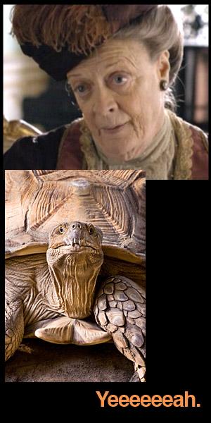 old-turtle