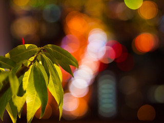 Leaf & Light of bokeh
