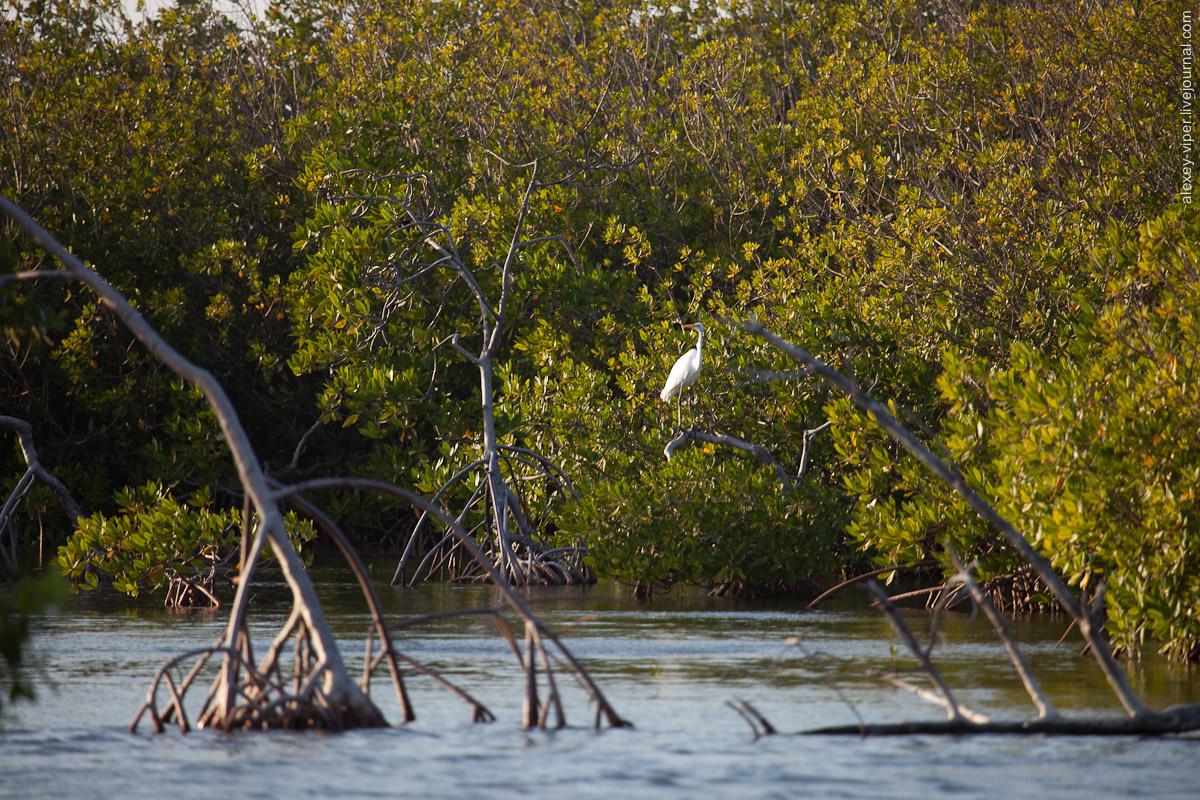 2012.01.12-2012.01.26_dive_safari_[cuba]-diving-001
