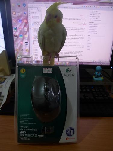 羅技 M705 無線滑鼠