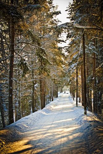 road trees sun snow cold nature forest suomi finland walkway metsä luonto kuusankoski