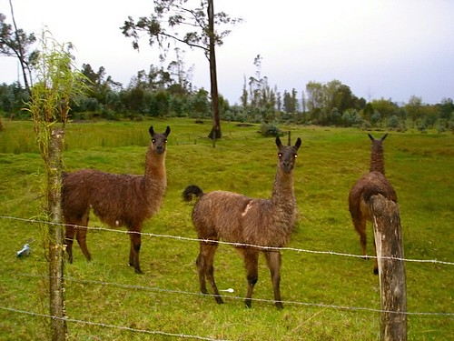 llama farmers