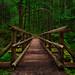 The Gorton Footbridge by Michael Bolognesi