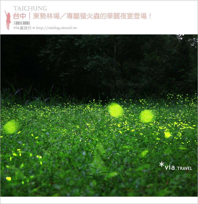 【台中螢火蟲】東勢林場螢火蟲~賞螢必遊!滿滿的螢火蟲閃爍夢幻光芒