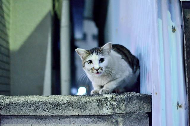 夜のネコ5
