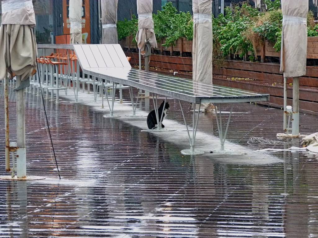 18-11-2011-cat-keeping-dry
