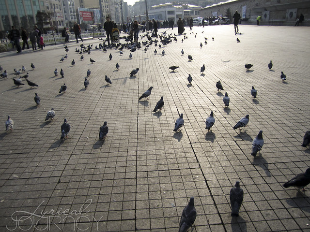 Birds on the Square