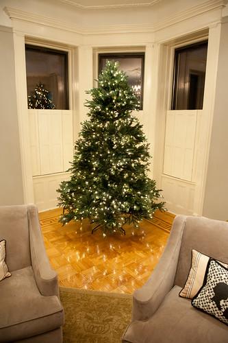 ChristmasTreeBalsamHill-12