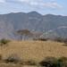 Cornfield - Maizal cerca de Santa María Yolotepec (al sur de Chalcatongo, Región Mixteca), Oaxaca, Mexico por Lon&Queta