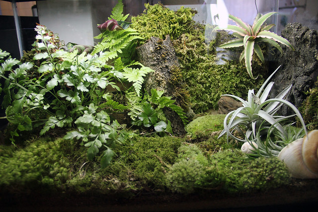 10 gallon terrarium | Flickr - Photo Sharing! 10 Gallon Vivarium