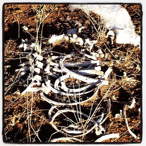 Okay, Archeologists: whose bones?