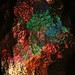 Festive Glow (15/365)