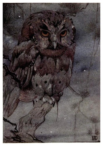 012-Desventuras de un buho-Birds and beasts 1911- Edward Detmold