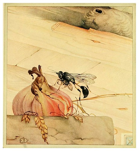 028-Pelopaeus spirifex- Fabre's book of insects ..1921-Ilustrado por Edward Detmold