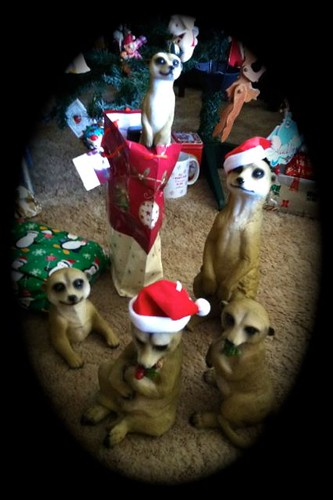 More meerkats