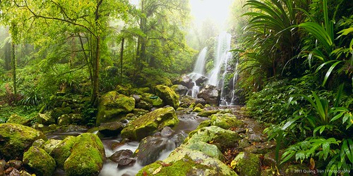 Rainforest of Lamington NP