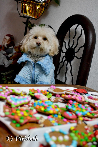 The Cookie Monster / El Monstruo come galletas by virideth