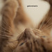 96/366: gatoversario by -Dreamflow-