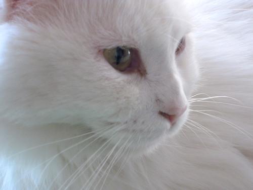 Junie Profile