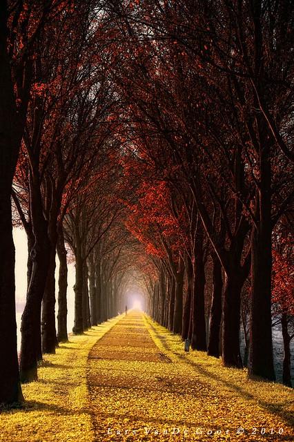 beautiful road_008