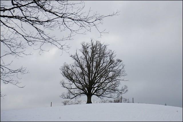 snowtree_8261 ©2012 RosebudPenfold