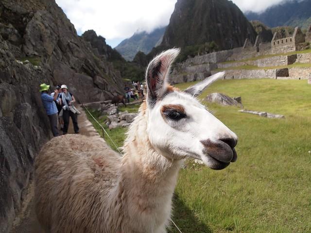 Machu Pichu-147