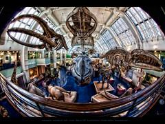 Magic world of the Sea II @ London History Museum
