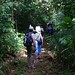Naturetrek group walking in rainforest at Des Cartier
