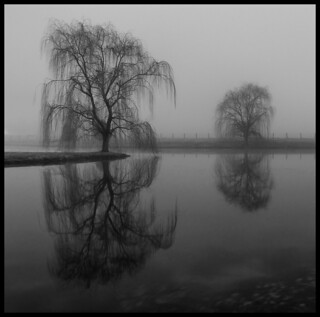 Reflections of a Foggy Night.